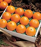 Snack Box of Florida Oranges by Organic Mountain