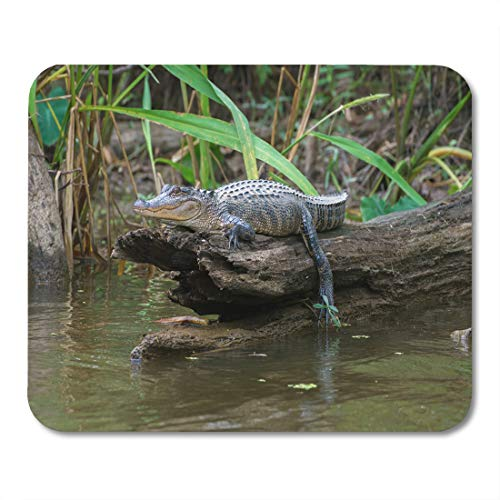 - Emvency Mouse Pads Tour Green Louisiana Honey Island Swamp American Alligator Bayou Mouse Pad for notebooks, Desktop Computers mats 9.5