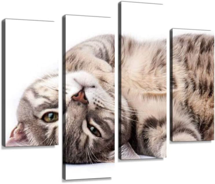Amazon Com Tabby Cat Relaxing Canvas Wall Art Hanging Paintings Modern Artwork Abstract Picture Prints Home Decoration Gift Unique Designed Framed 4 Panel Posters Prints