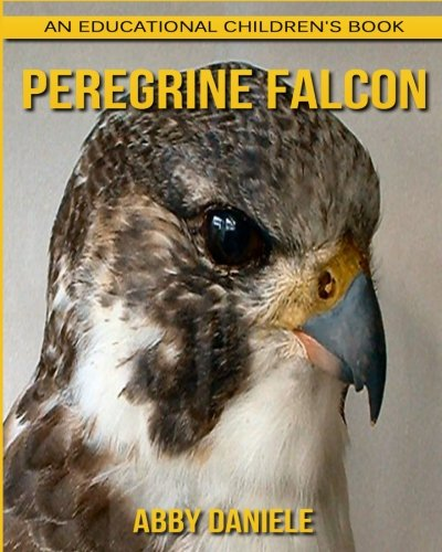 Peregrine Falcon! An Educational Children's Book about Peregrine Falcon with Fun Facts & Photos ebook