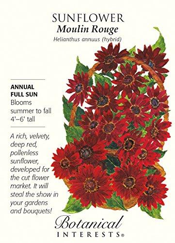 Moulin Rouge Sunflower Seeds - .90 (Botanical Interests Sunflower)