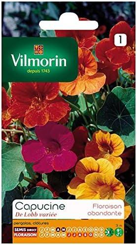 Capucine DE LOBB VARIEE Vilmorin