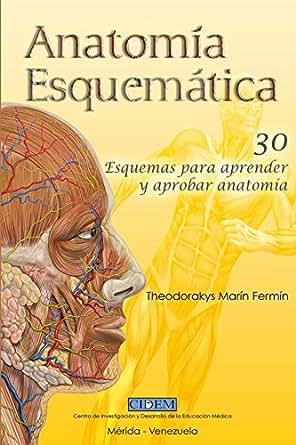 Anatomia Esquematica: 30 esquemas para aprender y aprobar anatomía ...
