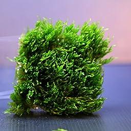 Flame Moss Pad 3\