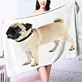 Microfiber Towels Funny,cute and playful pug dog isolated on white Multipurpose, Quick Drying L63 x W31.2 INCH