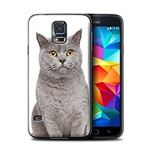 STUFF4 Phone Case / Cover for Samsung Galaxy S5/SV / British Blue Design / Cat Breeds Collection