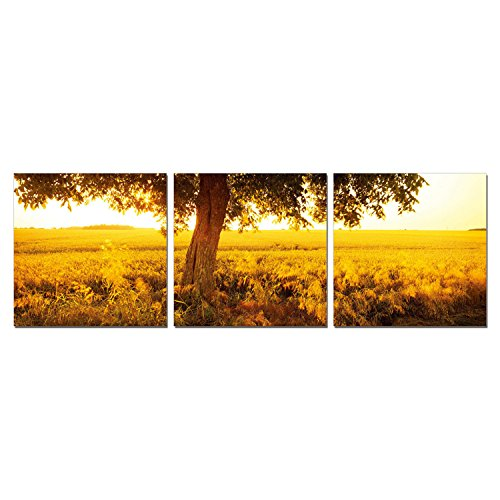 FURINNO Sunrise Density Photography Triptych