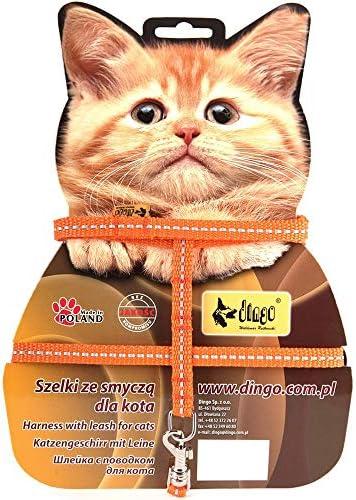 Dingo Energy Cinta reflexión arnés Plus para Gato, Color Verde: Amazon.es: Productos para mascotas