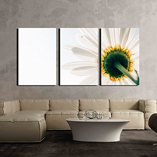 wall26 - 3 Piece Canvas Wall Art - Closeup of Daisy Flower on White Background - Modern Home Decor Stretched and Framed Ready to Hang - 16