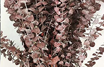 8 OZ Frosted Blue - 16 oz CalCastle Craft Natural Dried Preserved Eucalyptus Branches Large 30 Tall Bulk 1 LB
