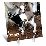 3dRose LLC Pygmy Goat Family Desk Clock, 6 by 6-Inch