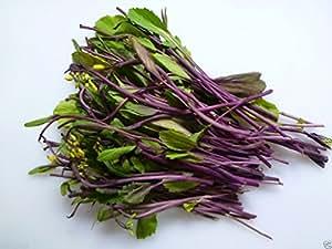 hon tsai tai 1000 Seeds - Purple Choy Sum (kosaitai) Plant Early Spring,Summer/Fall