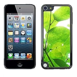 PC/Aluminum Funda Carcasa protectora para Apple iPod Touch 5 Sun Tree Green Nature Spring / JUSTGO PHONE PROTECTOR