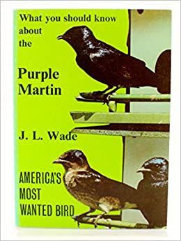 What You Should Know About the Purple Martin America's Most Wanted Bird
