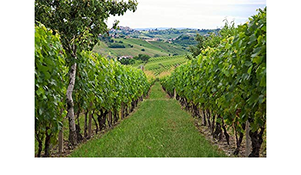 15x10ft Vineyard Landscape Background Rustic Farm Grape Trellis Photography Backdrop Countryside French Orchard Photo Studio Props Outdoor Nature Scenery Party Decoration Vinyl Banner