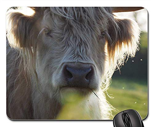 - Mouse Pad - Beef Highland Beef Scottish Hochlandrind Shaggy Cow 1