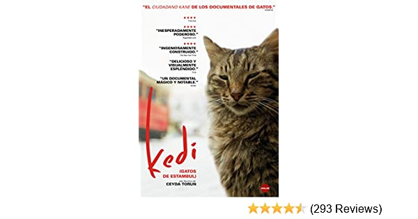 Amazon.com: Kedi (Gatos de Estambul) - (Non USA Format): Movies & TV