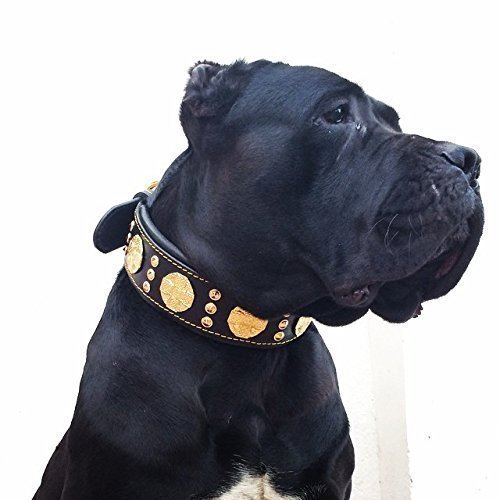 Bestia Maximus Genuine Leather Dog Collar, Large Breeds, Can