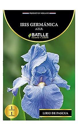 Semi Batlle–Bulbo Iris germánica Semillas Batlle 076885BOLS