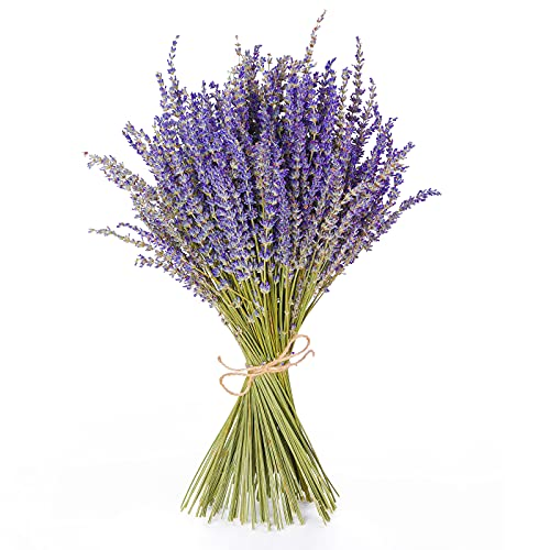 Naturally Highly Scented Lavender Flowers