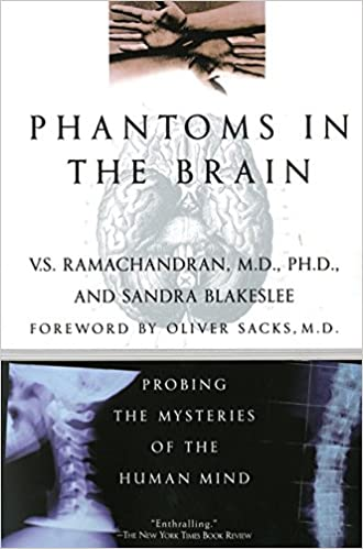 Pdf brain phantoms the in