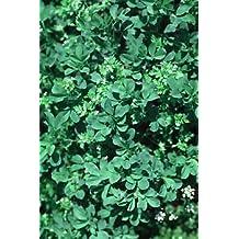 SowNatural Alfalfa Organic Seeds