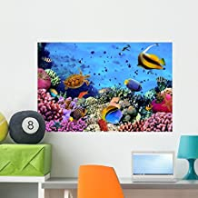 Photo Coral Colony Reef Wall Mural by Wallmonkeys Peel and Stick Graphic (36 in W x 24 in H) WM10918