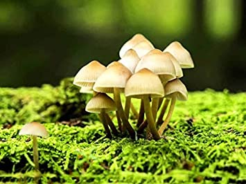 Tipos de hongos en plantas