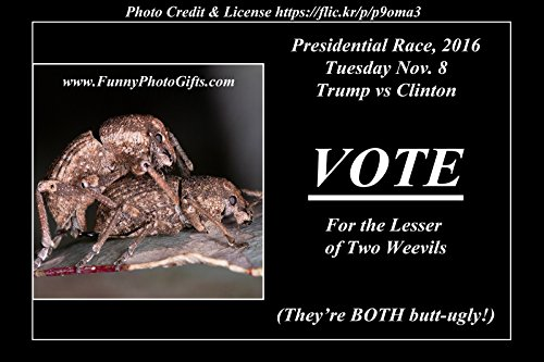 1 Medium Magnet ~ TWO WEEVILS ~ refrigerator fridge magnet, funny, humorous, approximately 3.75X2.5 inches (9.525 x 6.35 cm), meme decorative magnetic sign plaque photo, Presidential Race 2016 Trump v