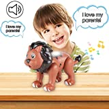 QUQUMA Animal Toys Magnetic Building, Touch