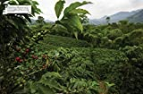 The World Atlas of Coffee: From Beans to Brewing