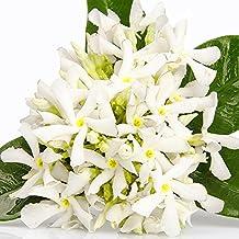 Patchouli Neroli Orange Blossoms - Soap making premium fragrance oil, Bath Body Safe, Lotions, Creams 60ml/2oz