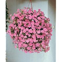 Petunia-Spreading Wave Pink 100 seeds