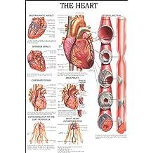 The heart: E-chart, full illustrated