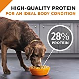 Purina Pro Plan With Probiotics Dry Dog Food, SAVOR