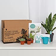 Costa Farms O2 For You Live Indoor Plant and Succulent-Cactus Mix Subscription Box, Small