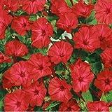 Outsidepride Mirabilis Four O'Clock Vine Red Flower