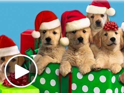 Caroling Canines - Animated eGift Card