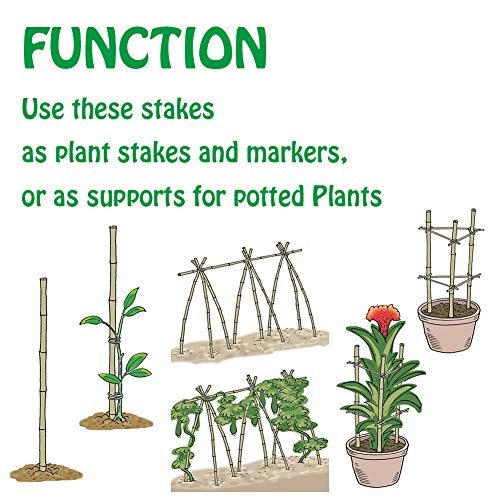 Mininfa Natural Bamboo Stakes 5 Feet, Eco-Friendly Garden Stakes, Plant Stakes Supports Climbing for Tomatoes, Trees, Beans, 20 Pack