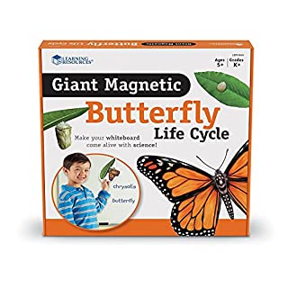 Learning Resources Butterfly Life Cycle, 9 Write and Wipe Pieces, Classroom Accessories, Teaching Aids, Ages 5+