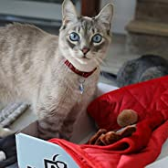 BoxCat Seasonal Cat Subscription Box – 4 GIANT Boxes Per Year with cat treats and cat toys: 1 Luxury Item