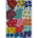 LoveDiyLife 72 pcs Multiple Dried Flowers, Pink Larkspur, Mini Rose, Hydrangea, Daisy, Real Pressed Dried Flowers
