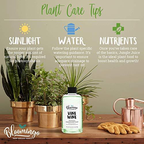 Bloomingo Indoor Plant Food - Vine Wine All Purpose Liquid Houseplant Fertilizer + Natural Norwegian Seaweed Extract for Healthy Plants and Soil - 8 oz