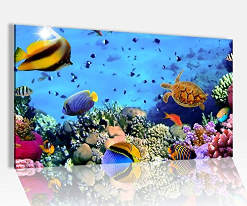 Acrylglasbild 80x50cm Fische Korallen Riff Unterwasser Glasbild Bilder Acrylglas Acrylglasbilder Wandbild 14D155, Acrylglas Größe4 80cmx50cm