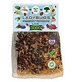 Clark&Co Organic 3000 Live Ladybugs - Good Bugs for Garden - Guaranteed Live