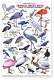 fishcardscom Tropical Water Birds ID Card