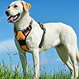 Front Range Large Dog Harness No Pull Adjustable Protective Vest Harness Step-in Oxford and Mesh Pet Harness with Padded Handle for Outdoor Walking Training (Large, Orange)