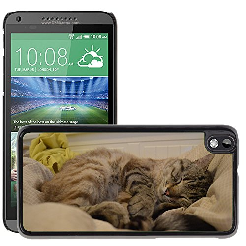 Hot Style Cell Phone PC Hard Case Cover // M00116621 Cat Cats Snow Bengal Race Cat Sleep // HTC Desire 816