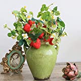 Felice Arts 6 Pack Artificial Strawberries Rich Red Fake Strawberry Raspberry Stems Fruit Faux Holly Berries for Garden Yard Fence Outdoor Festival Holiday Home Decor