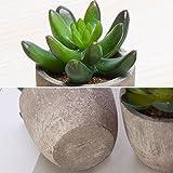 MoonLa Artificial Succulent Plants, Assorted